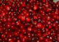Brusnice – červené bobule plné zdravia